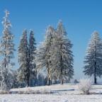 im weißen Winterwald