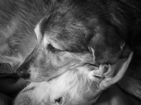 Zusammen müde