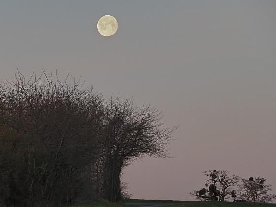Morgenstimmung mit Mond