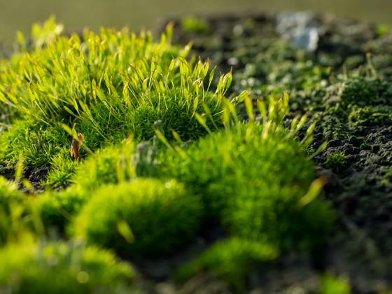 Die kleinen Dinge der Natur