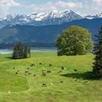 Unterwegs in Bayern Blick auf den Forggensee