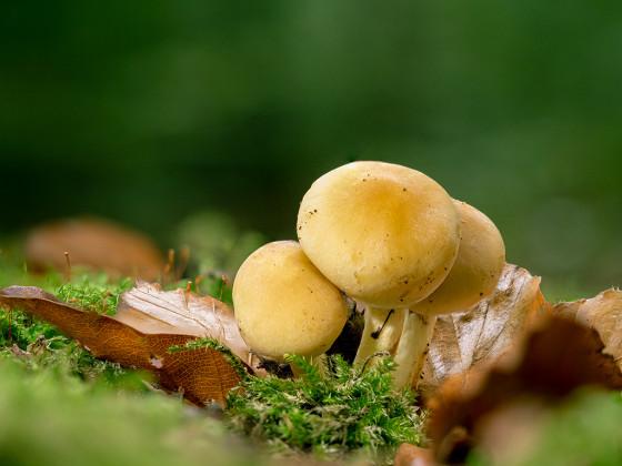 und doch wieder Pilze