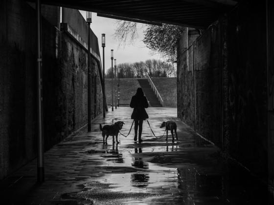 Dogwalk Nr. 2