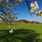 Frühlingswiese Kalchreuth